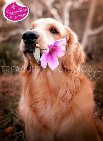 Golden Retriever with Flower | SIGNATURE | Diamond Painting - Treasure Studios Art
