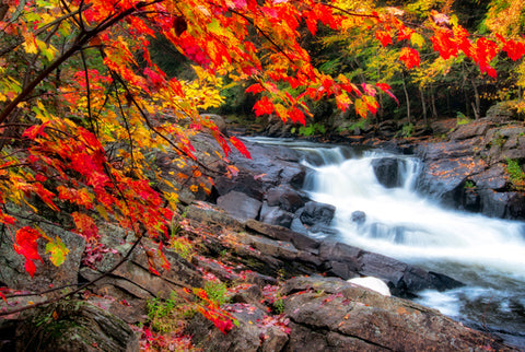 Autumn River Rapids| Diamond Painting - Treasure Studios Art
