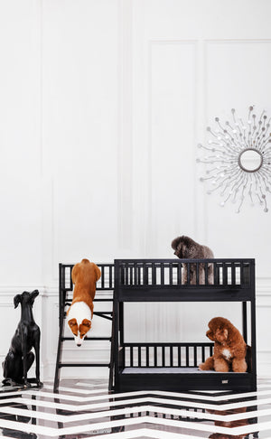 Espresso Aspen Bunk Bed - PetCareShops