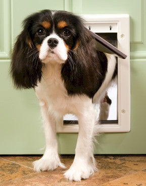PetSafe Plastic Dog Door - Small