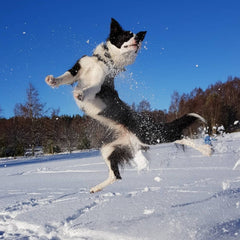 Foss jumping in Snow