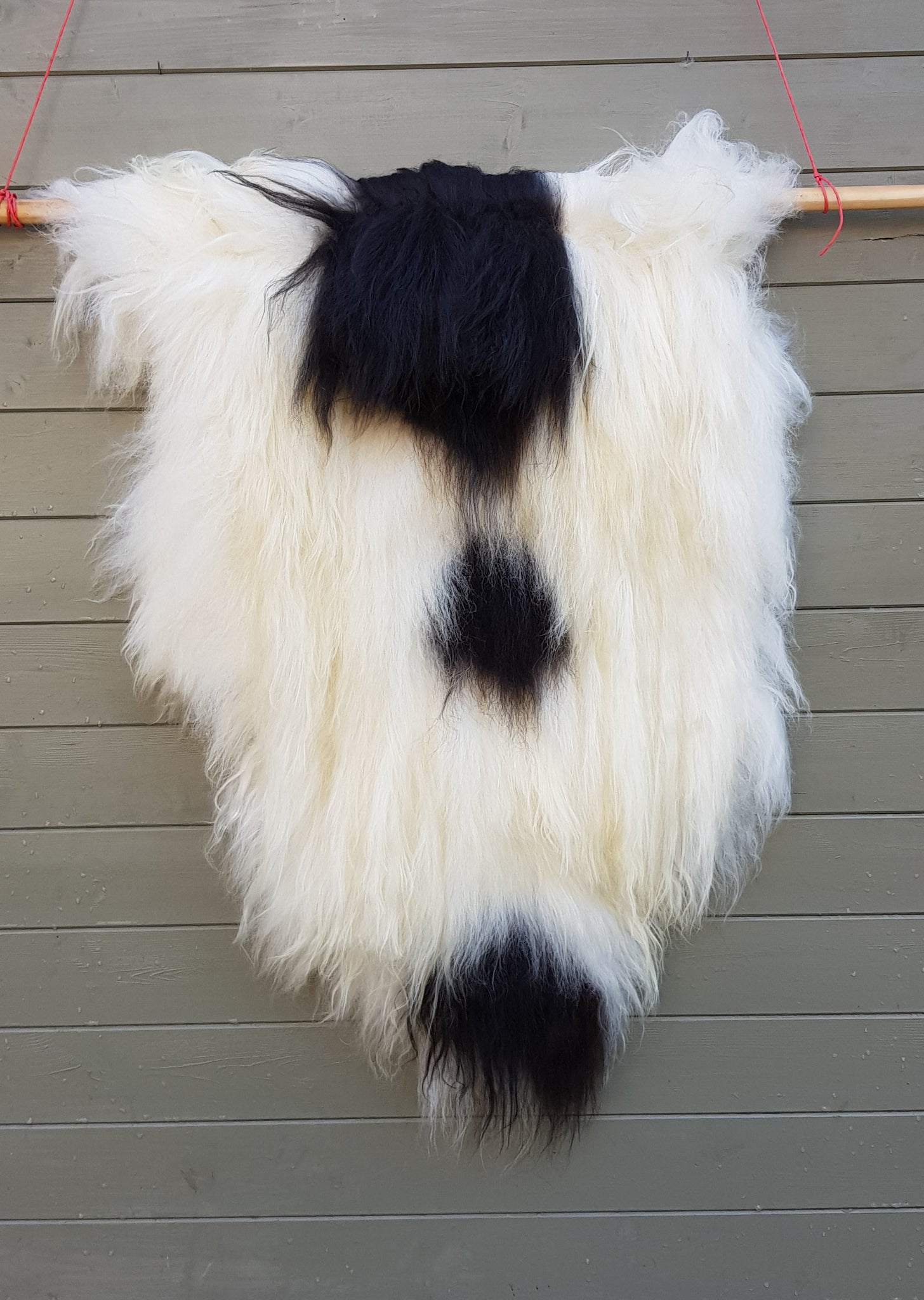 Black and White Icelandic sheepskin