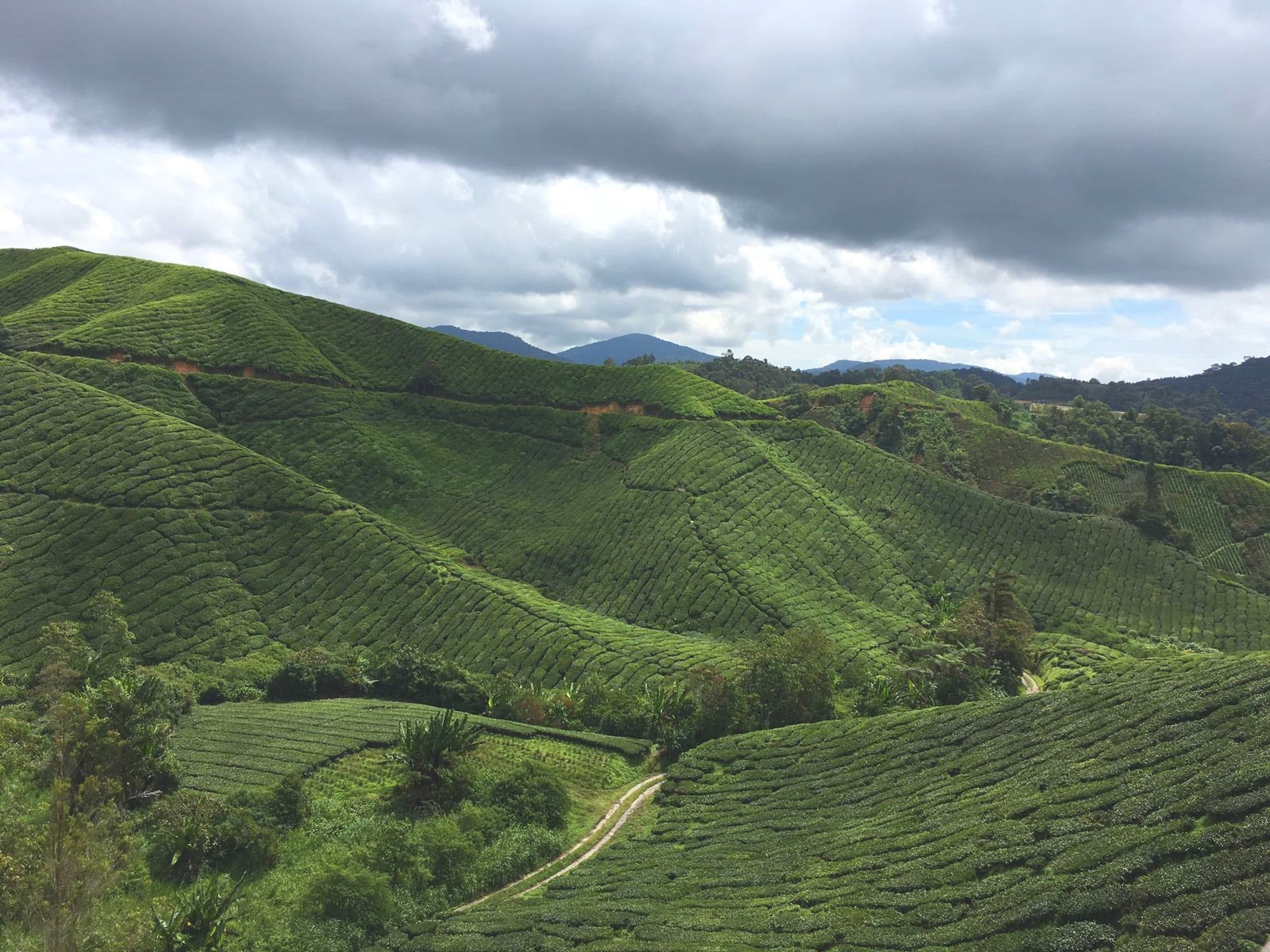 thevasion the bio voyage malaisie cameron highlands