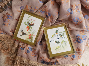 2 x Vintage Bird prints framed
