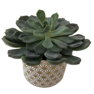 Large potted Escheveria succulent plant in a white and gold Celtic-inspired compote.