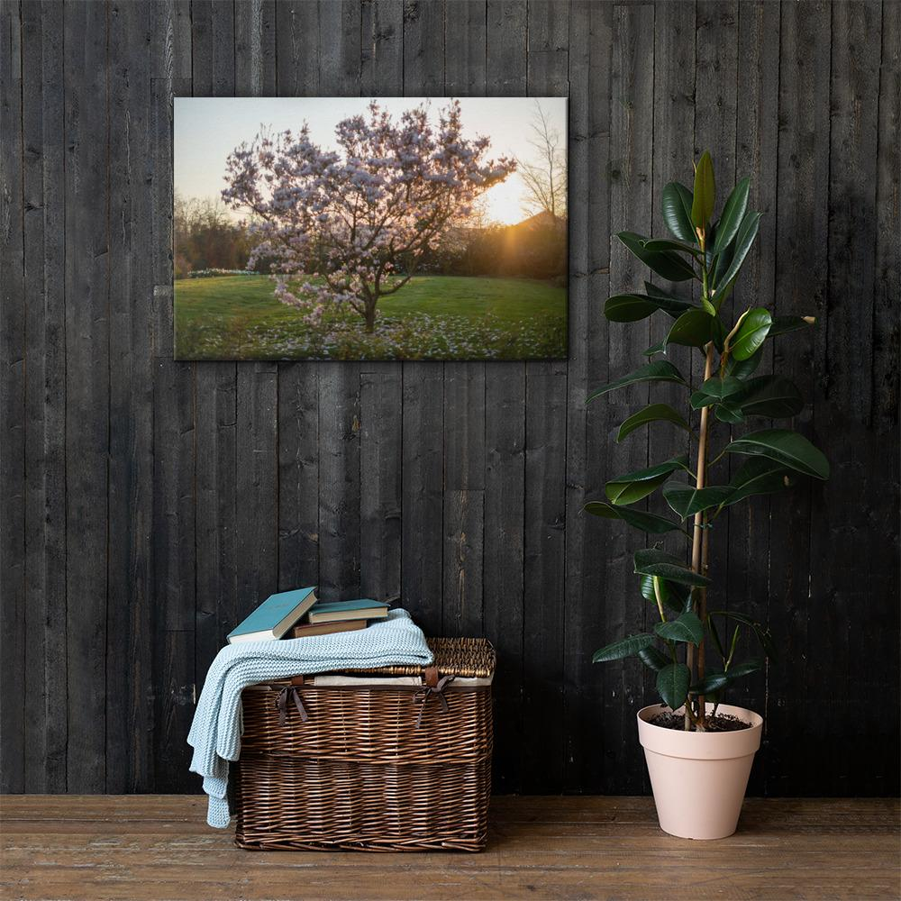 English Cherry Tree in Blossom by Jeremy Foxx - Pro Travel Gear ShopArtClassic Nomadic Man