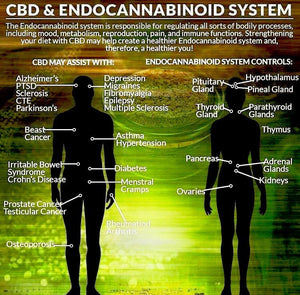 CBD and Endocannabinoid system, hemp oil. cbd oil, seizures, allergies, asthma, IBS, Irritable bowl, anxiety, PTSD, alzheimers, parkinson's, lyme disease