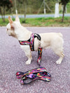 Rainbow Dog Harness & Leash - Updated!  - Equally Younique LGBTQ Shop