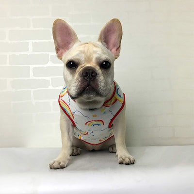 Rainbow Dog Shirt For Small & Medium Dogs  - Equally Younique LGBTQ Shop