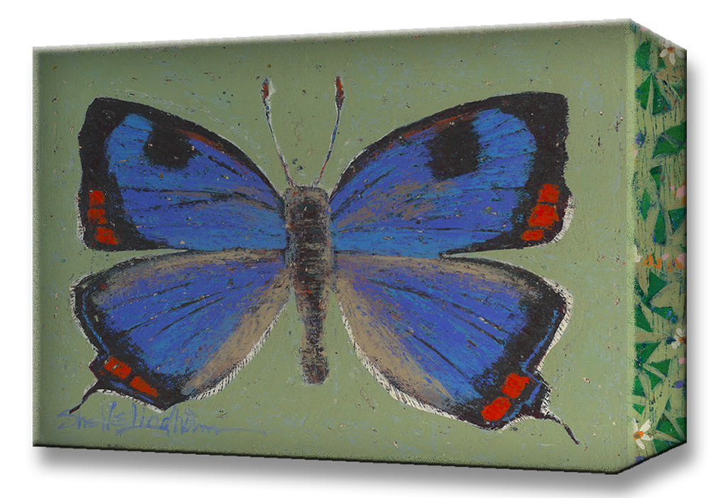 Colorado Butterfly:  Metal 18x26 Inches