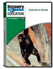 Animals in Action DVD
