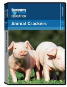 Animal Crackers DVD