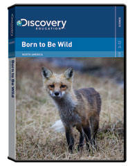 NORTH AMERICA: Born to Be Wild DVD