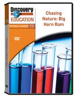 Chasing Nature: Big Horn Ram DVD