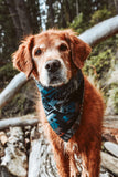 ZION - Adjustable Dog Bandana