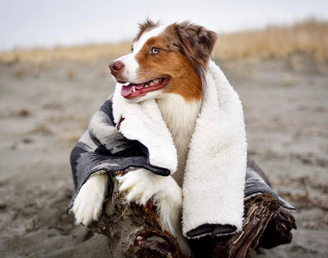 ASPEN - Pet Sleeper Blanket with RuffTrek Sherpa