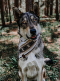 BODHI  - Adjustable Dog Bandana