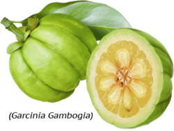 Garcinia Cambogia and its Weight Loss Properties