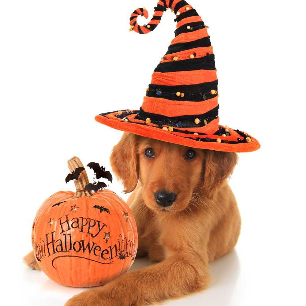 5 Halloween Tips and Tricks for Dogs with Anxiety