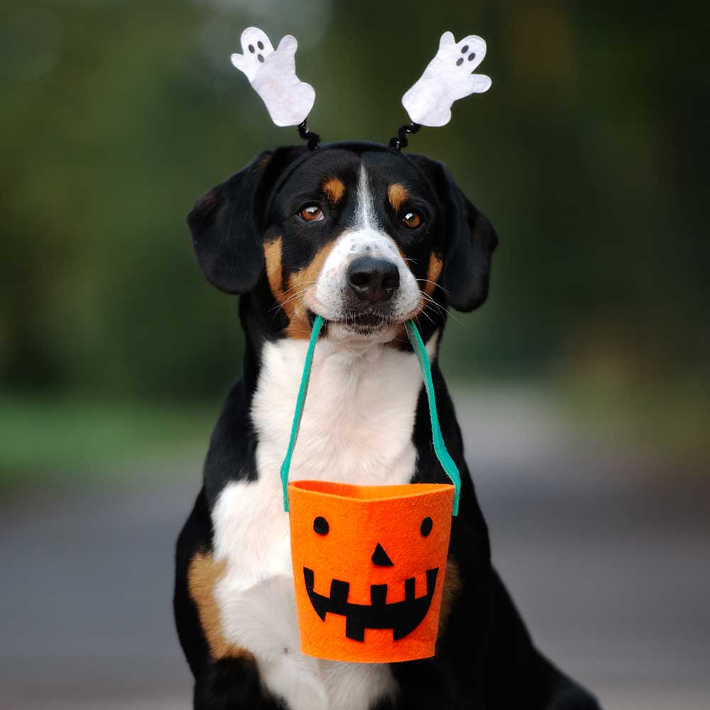 Caring for Your Dogs During Halloween