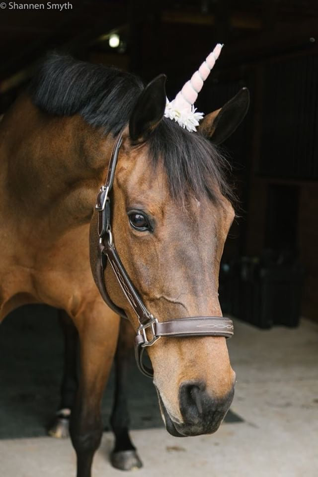 Horse Glam Review