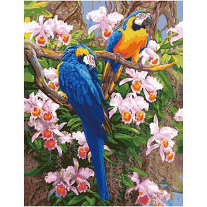 Parrots Frameless DIY Acrylic Paint By Numbers Kit 40x50cm