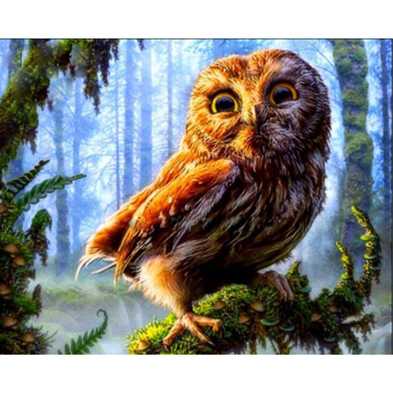 Owl Bird DIY Acrylic Paint By Numbers Kit 40x50cm