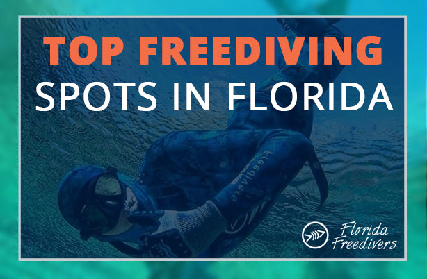 Top Freediving Spots In Florida Florida Freedivers
