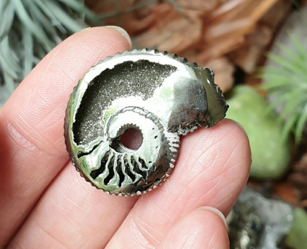 PYR-09: Pyritized Ammonite Fossil from Mikhaylov Mine, Russia