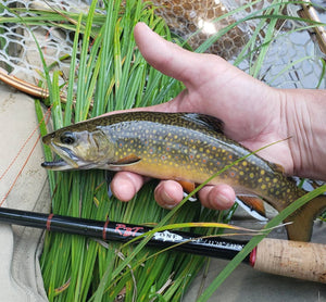 wild brook trout and tenkara rod