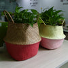 WHISM Foldable Seagrass Rattan Belly Storage Basket Home Room Plants Decoration Plant Toys Laundry Storage Holder Container - Dropshipper US