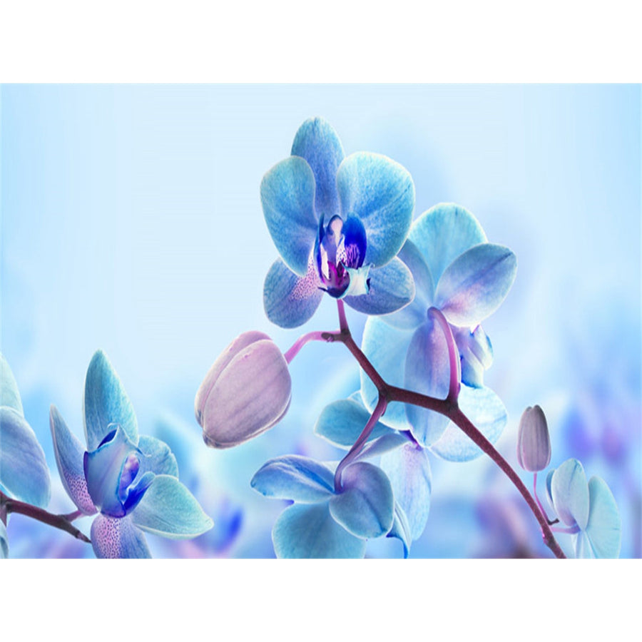 by patricia orchid photograph orchids januszkiewicz blue featured diamond