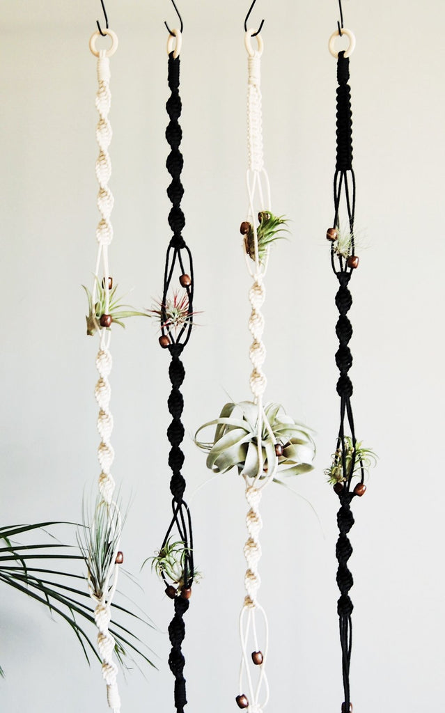 Air Plant Hanger (White)