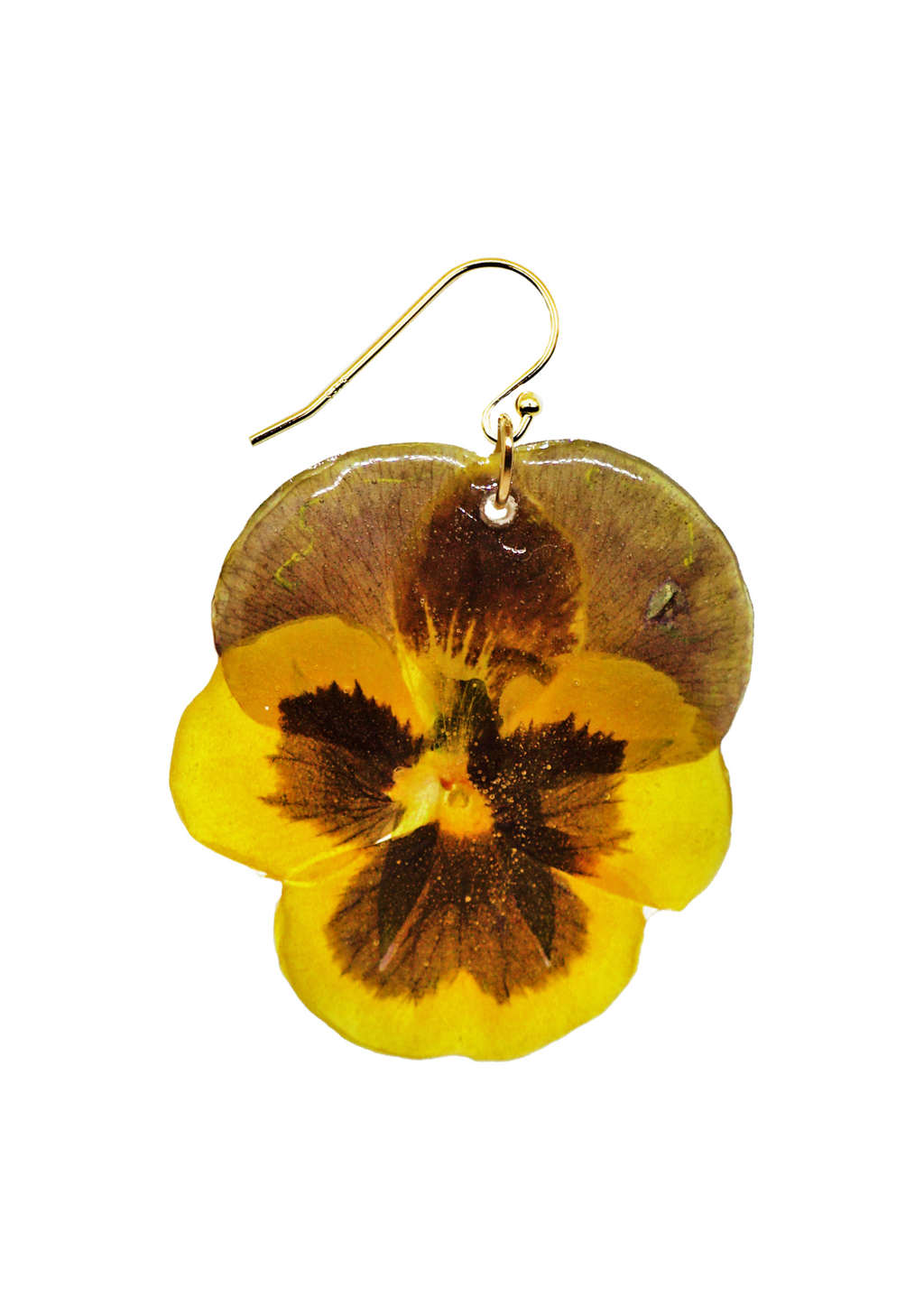 Large Sunshine Pansy
