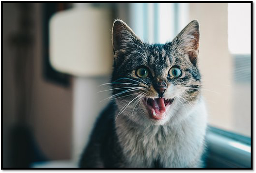 How You Can Improve Your Cat's Dental Health