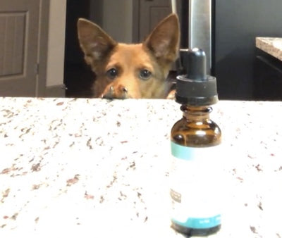 Now...Where is that 'Sweet Spot?' A Beginners Guide to Starting Hemp Oil for Your Pets