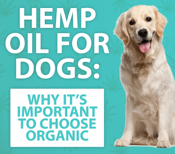 Hemp Oil For Dogs: Why It's Important To Choose Organic