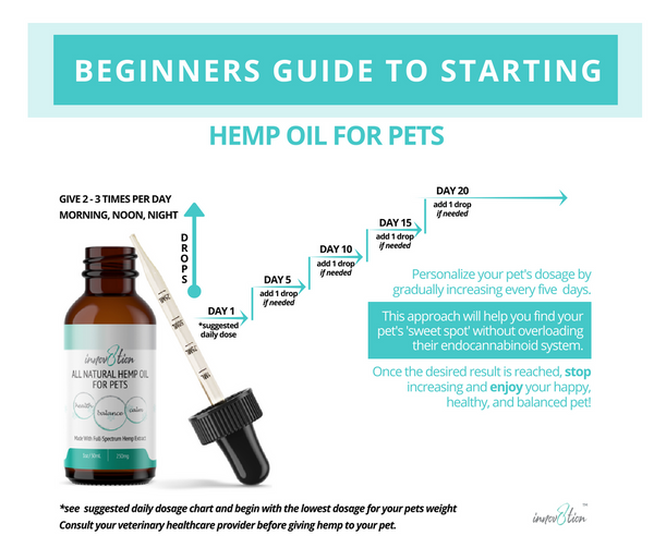 Beginners guide to starting innov8tion hemp oil for pets