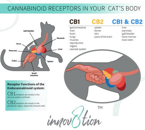 Cat ECS system and how CBD works