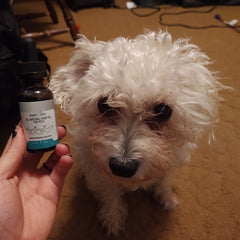 innov8tion for pets cbd oil helps with seizures