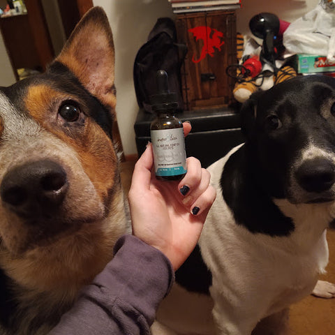 innov8tion cbd oil eases allergies & anxiety for pets
