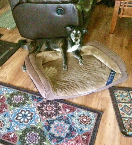 Maki comfortable with less pain thanks to innov8tion hemp oil for pets