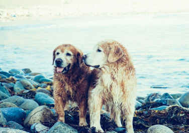 Two Dogs on Sea stack