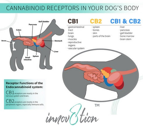 Dog ECS system how does CBD work