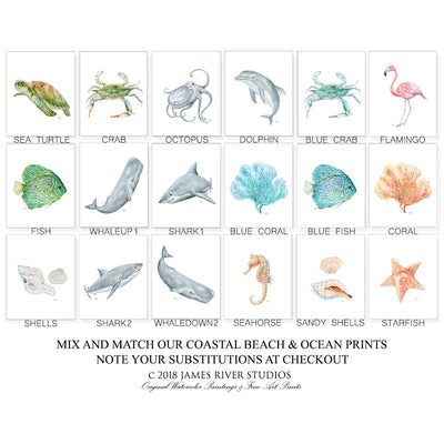 Ocean & Sea Life Nautical Prints
