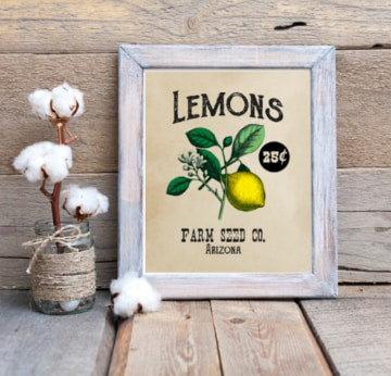 Lemon Seed Packet Print