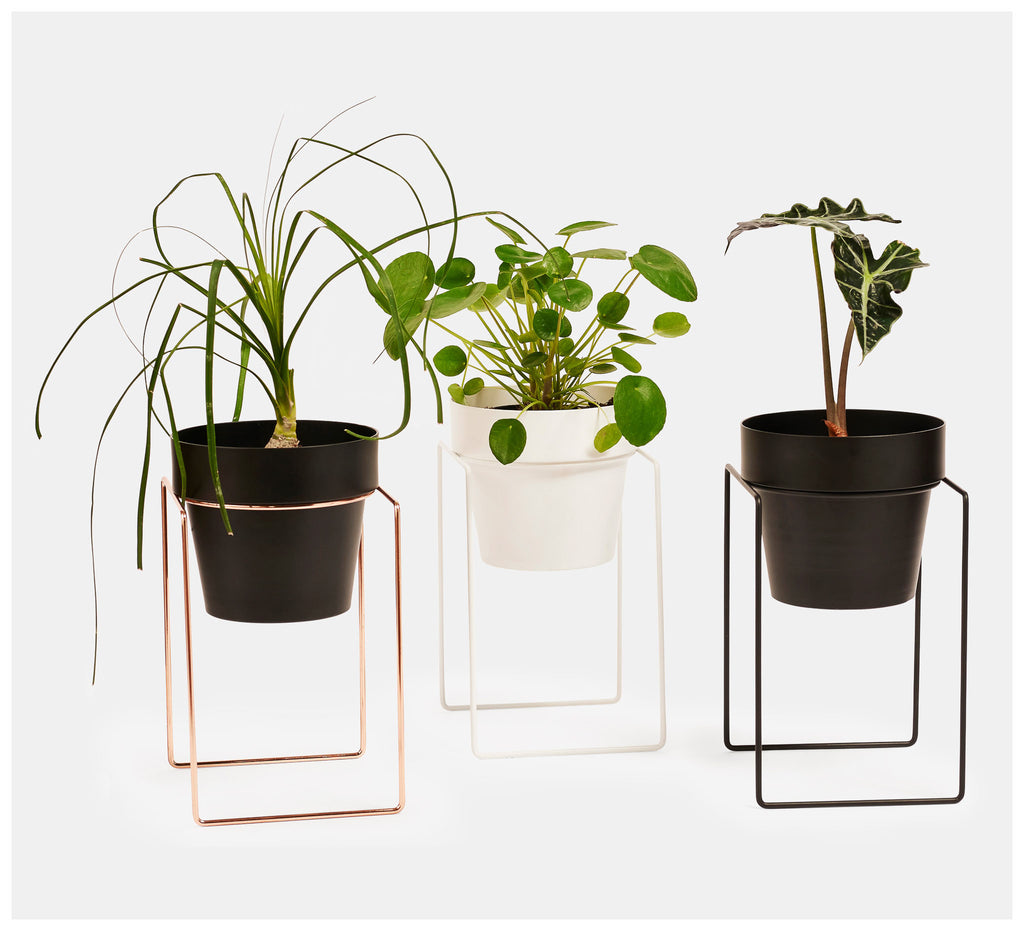 Bendo - Shrub Plant Stand Mini - Black, White or Copper