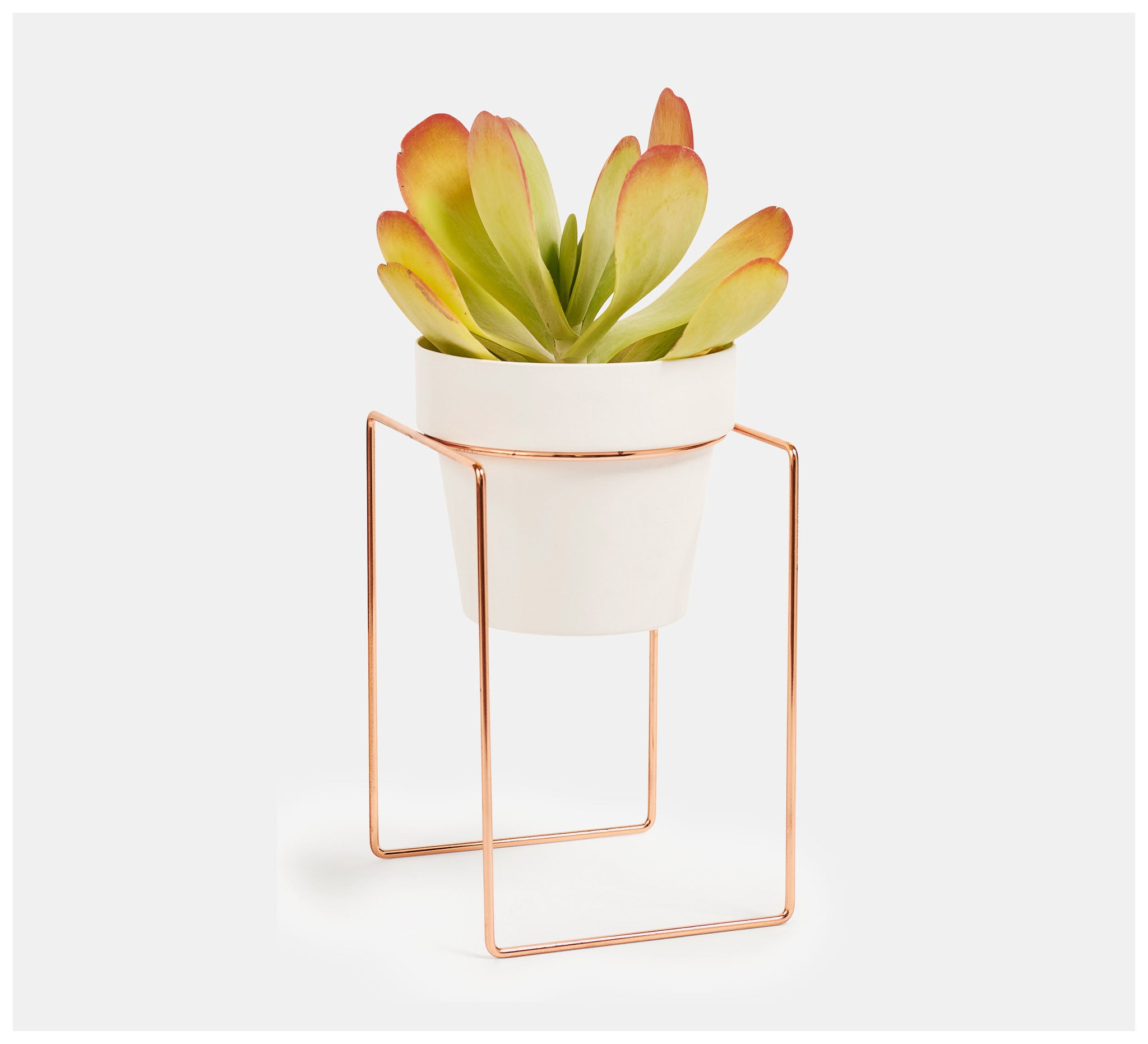 Bendo - Shrub Bundle Plant Stand & Mini Pot - Black, White or Copper