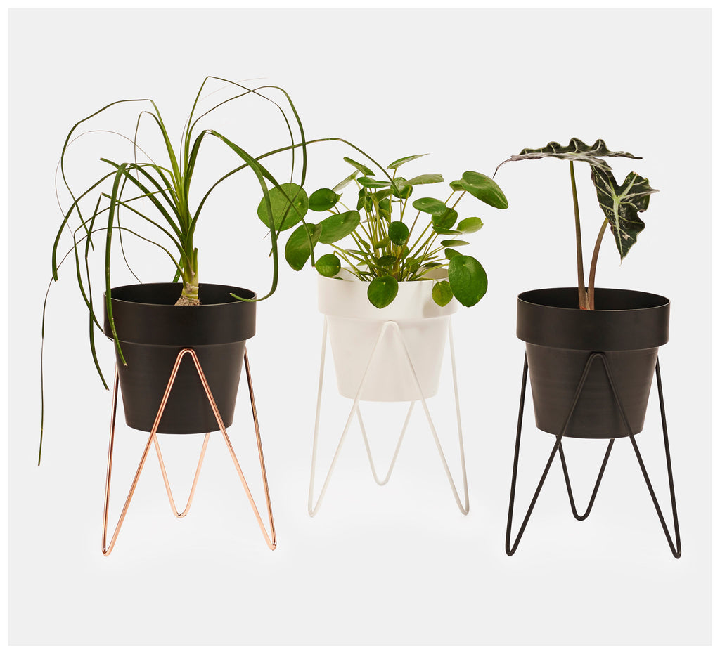 Bendo - Sprout Plant Stand Mini - Black, White or Copper
