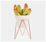 Bendo - Sprout Bundle Plant Stand & Pot Mini - Black, White or Copper